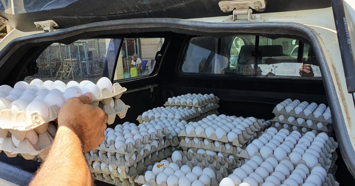 הביצים שנתפסו ללא פיקוח