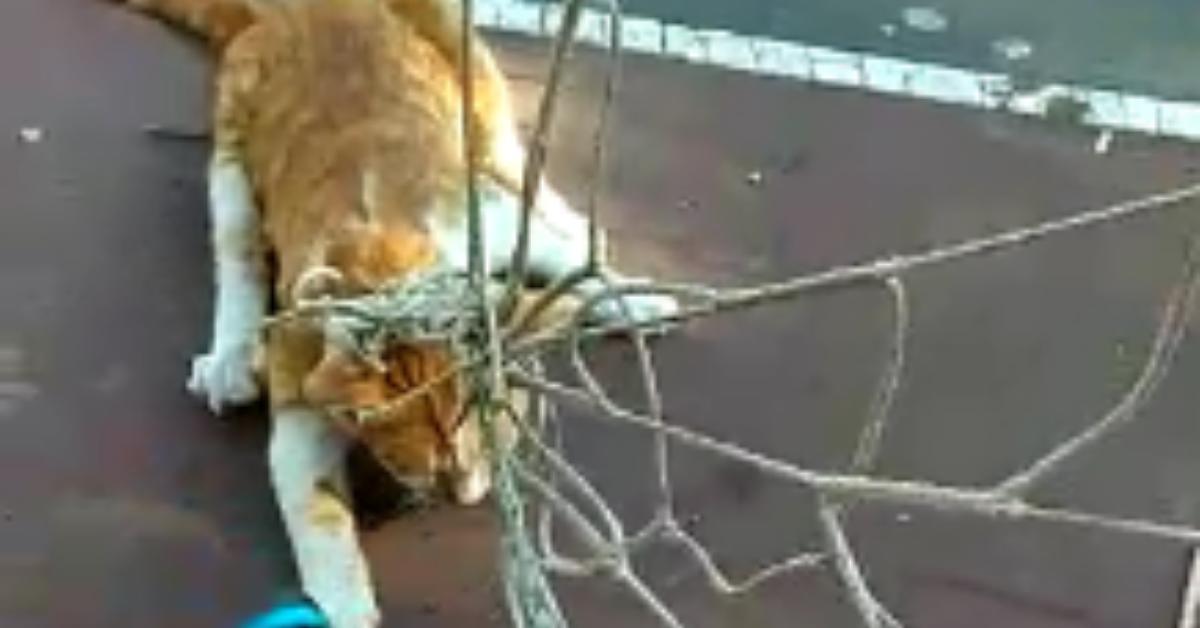 חתול הסתבך ברשת