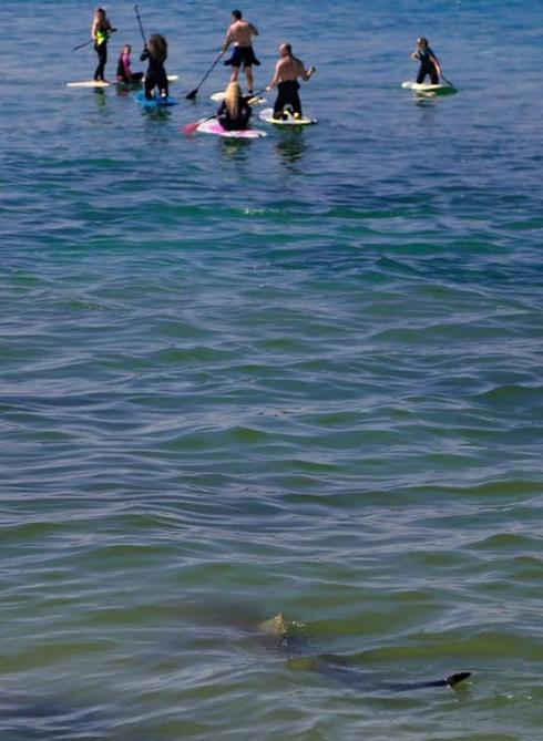 שטים ומחפשים כרישים (צילום: איתמר רותם)